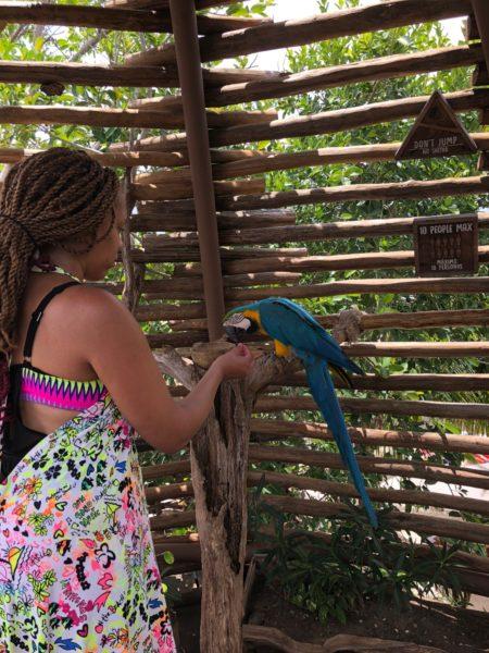 Giveaways 4 Mom Bird Feeding in Costa Maya