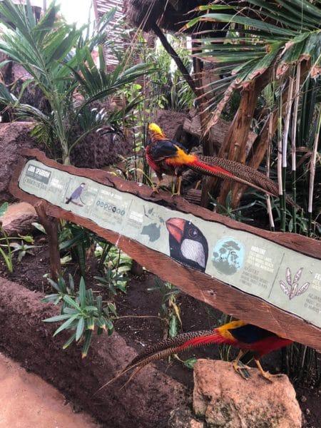 Costa Maya Birds