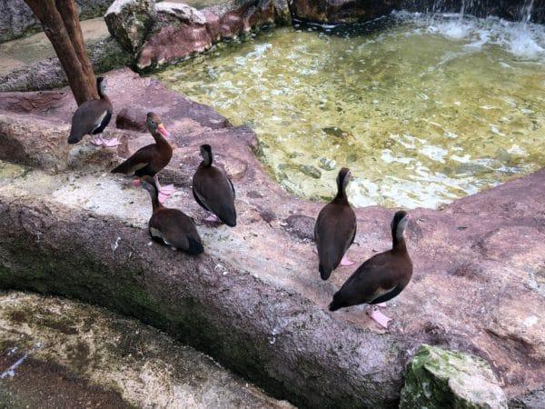 Birds in Costa Maya