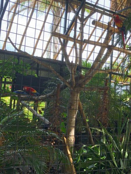 Belize Parrots